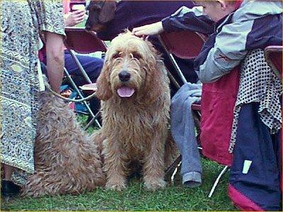 Shaggy Dog Breeds
